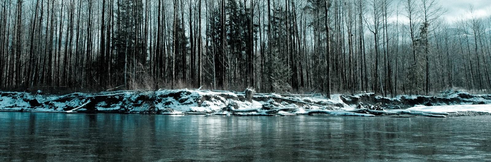 Winter-Eagle-Scene